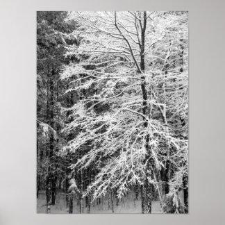 Árbol de arce resumido en nieve poster