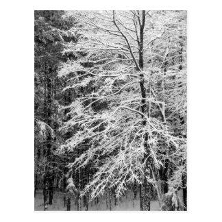 Árbol de arce resumido en nieve postales