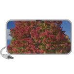 Árbol de arce rojo en colores del otoño, cerca de  mini altavoz