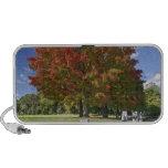 Árbol de arce rojo en colores del otoño, cerca de  iPhone altavoz