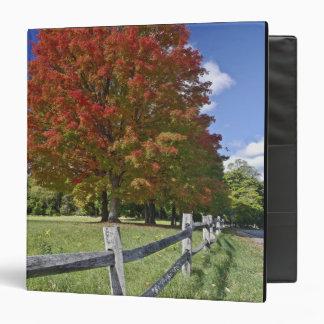 Árbol de arce rojo en colores del otoño, cerca de