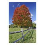 Árbol de arce rojo en colores del otoño, cerca de  fotos
