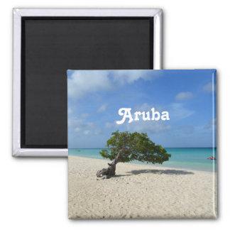 Árbol de Aruba Divi Divi Imán Cuadrado