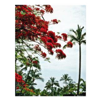 """Árbol de Bouganvillea - Kauai Folleto 8.5"""" X 11"""""""