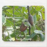Árbol de cacao, Kauai, Hawaii Tapete De Ratón