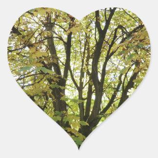 Árbol de castaña de caballo del otoño pegatina en forma de corazón