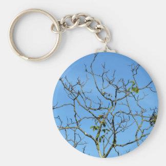 Árbol de castaña desnudo en un día soleado llavero redondo tipo pin