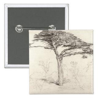 Árbol de cedro viejo en el jardín botánico Chelse Pin
