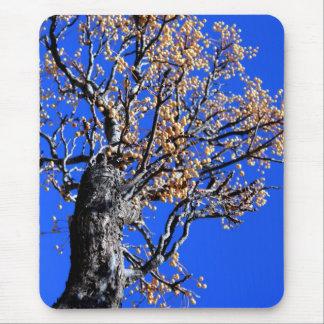 Árbol de Chinaberry Tapete De Raton