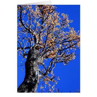 Árbol de Chinaberry Tarjeta De Felicitación