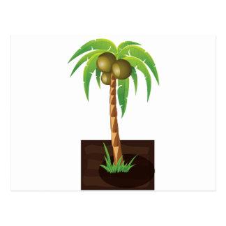 Árbol de coco de QPC Tarjetas Postales