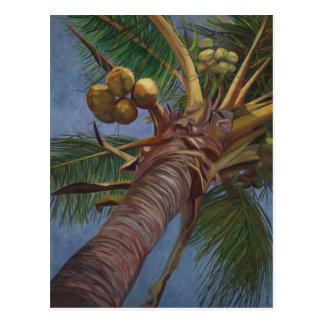 Árbol de coco tarjetas postales