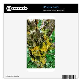 árbol de corteza de madera skin para el iPhone 4