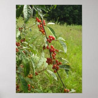 Árbol de Crabapple Póster