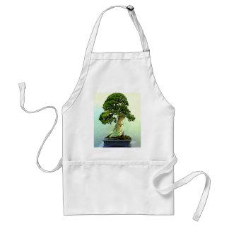 Árbol de Cypress de los bonsais Delantales