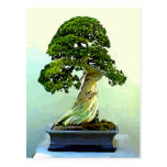 Árbol de Cypress de los bonsais Postales
