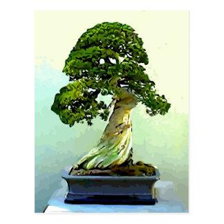 Árbol de Cypress de los bonsais Tarjeta Postal