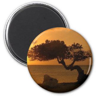 Árbol de Divi Divi de la puesta del sol de Aruba Imán Redondo 5 Cm