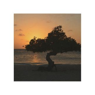 Árbol de Divi Divi de la puesta del sol Impresión En Madera
