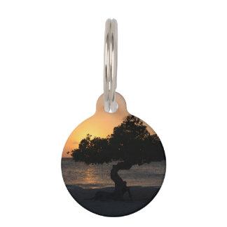 Árbol de Divi Divi de la puesta del sol Placa Para Mascotas