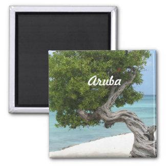 Árbol de Divi Divi en Aruba Imán Cuadrado