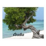Árbol de Divi Divi en Aruba Postales