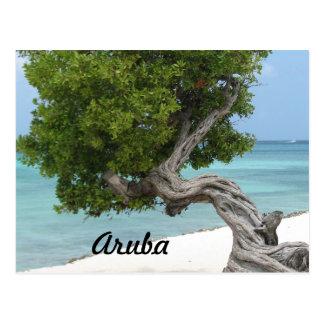 Árbol de Divi Divi en Aruba Tarjetas Postales