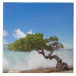 Árbol de Divi Divi, playa de Eagle, Aruba, del Car Tejas Ceramicas