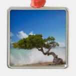 Árbol de Divi Divi, playa de Eagle, Aruba, del Car Ornamentos De Reyes Magos