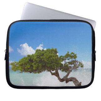 Árbol de Divi Divi, playa de Eagle, Aruba, del Car Fundas Portátiles