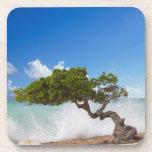Árbol de Divi Divi, playa de Eagle, Aruba, del Car Posavasos De Bebida