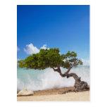Árbol de Divi Divi, playa de Eagle, Aruba, del Car Tarjetas Postales