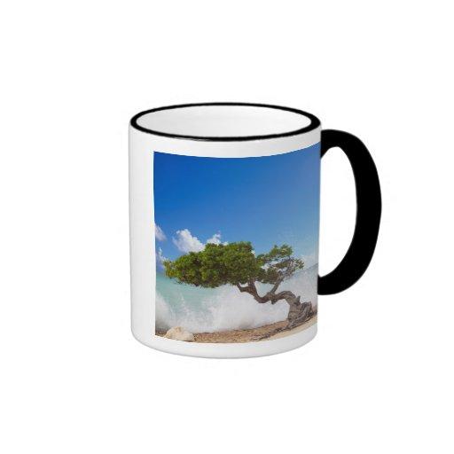 Árbol de Divi Divi, playa de Eagle, Aruba, del Car Taza