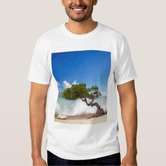 Árbol de Divi Divi, playa de Eagle, Aruba, del Polera