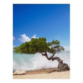 Árbol de Divi Divi, playa de Eagle, Aruba, del Postal
