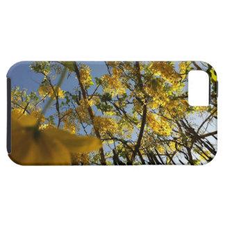 Árbol de ducha de oro funda para iPhone SE/5/5s
