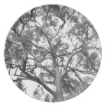 Árbol de eucalipto plato para fiesta