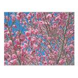 árbol de florecimiento en rosa postal