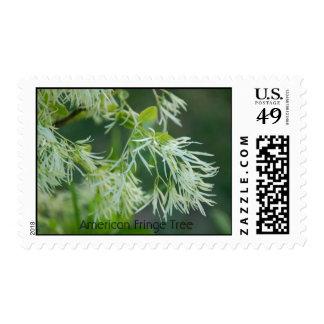 Árbol de franja americano sellos
