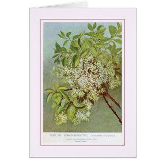 Árbol de franja tarjeta de felicitación