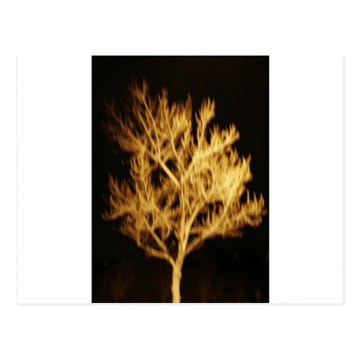 Árbol de fuego tarjetas postales