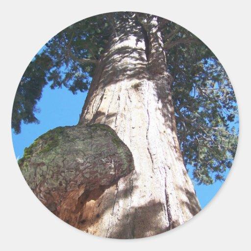 Árbol de Gerneral Sherman Pegatina Redonda