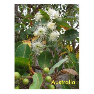 Árbol de goma en flor tarjetas postales
