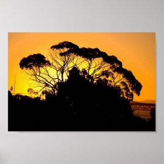 Árbol de goma en la puesta del sol, Auckland, Nuev Poster