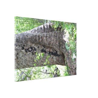 Árbol de goma roja en bosque impresiones en lona