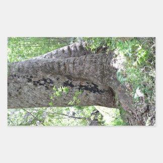 Árbol de goma roja en bosque pegatina rectangular