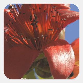 Árbol de goma rojo calcomania cuadradas