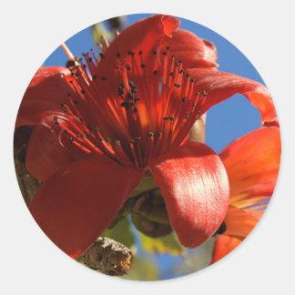 Árbol de goma rojo pegatina redonda