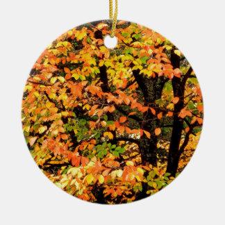 Árbol de haya del otoño en el parque Portland Adorno Navideño Redondo De Cerámica