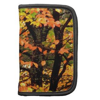Árbol de haya del otoño en el parque Portland Oreg Planificadores